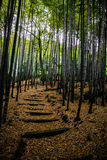 Pretty Bamboo Grove  in Japan. Steps through a bamboo grove in Japan. In the grounds of a temple Royalty Free Stock Photo
