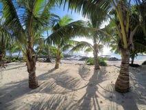 Pretty beach with palm trees at Lefaga, Matautu on Upolu Island,. Western Samoa, South Pacific Stock Image