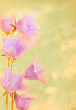 Pretty Bellflowers against Textured Cloudy Sky Royalty Free Stock Images