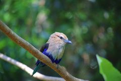 Pretty bird. A beautiful bird is perched on a branch at the Atlanta zoo Georgia Royalty Free Stock Image