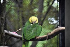 Pretty bird. A bird in a cage of a zoo with a yellow head and green feathers Stock Photos