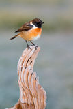 Pretty bird on nature Stock Photo