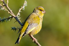 Pretty bird in the nature. Pretty bird With a nice green plumage in the nature Stock Image