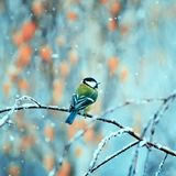 Pretty bird sitting in the Park on a branch during the first sno. Wfall Stock Images