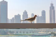 Bird in a city next to skyscraper buildings and towers. royalty free stock photography
