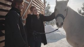 Pretty blond woman and tall bearded man standing with white horse at the snow winter ranch. Girl strokes animal. Happy. Pretty blond woman and tall bearded man stock video footage