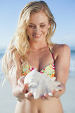 Pretty blonde in bikini holding conch on the beach Royalty Free Stock Photo
