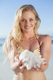 Pretty blonde in bikini holding conch on the beach Stock Photography