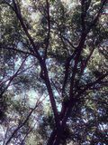 Clear blue skies in the shade trees. Pretty blue sky sitting under a shade tree summertime royalty free stock photos