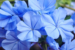 Pretty bouquet of blue flowers Stock Images