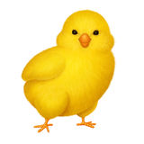 Yellow chicken Royalty Free Stock Images