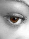 Pretty Brown Eye Royalty Free Stock Photos