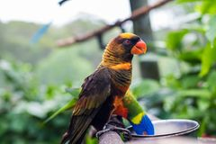 Pretty Brown, orange and yellow parrot. Cute little birdie about to get some food, with is bright orange beak Stock Images
