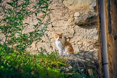 Pretty brown and white cat sitting sunbathing in the garden of an old house royalty free stock photography