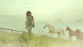 Pretty brunette lady resting among horses Stock Photos