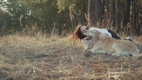 Pretty brunette walks with a Golden-colored Labrador in the spring forest stock video