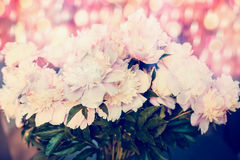 Pretty bunch of pink  pale peonies with bokeh lighting, close up. Pastel Royalty Free Stock Photo