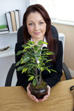 Pretty businesswoman holding a plant in her office Stock Images