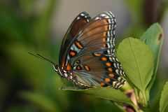 Pretty butterfly. Lovely butterfly istting on a leaf Royalty Free Stock Image
