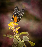 Pretty Butterfly Royalty Free Stock Photo