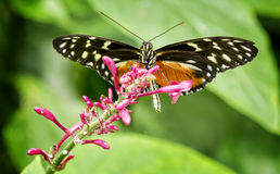 Pretty Butterfly Stock Photo