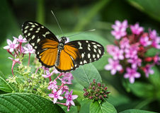 Pretty Butterfly Stock Photos