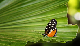 Pretty Butterfly Stock Photography