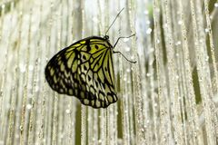 Pretty Butterfly sitting on a curtain of beads. stock photo