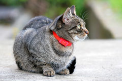 Pretty cat Stock Images