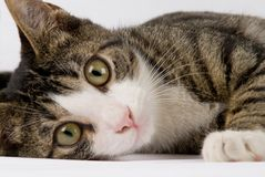 Pretty cat close up. Pretty laying down cat close up Stock Image