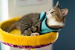 Pretty cat on floor Stock Photography
