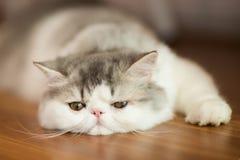 Pretty cat on floor Stock Photo