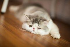 Pretty cat on floor Royalty Free Stock Image