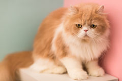 Pretty cat on floor Stock Photo