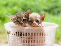 Pretty cat kitten Stock Image