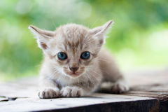Pretty cat kitten Stock Photo