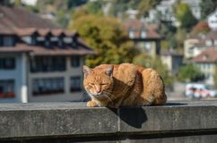 Pretty cat sitting on street in old town royalty free stock photo