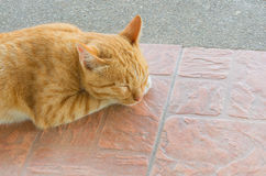 Pretty cat sleep in outside the house image Stock Images