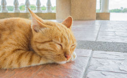 Pretty cat sleep in outside the house image Royalty Free Stock Photo