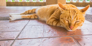 Pretty cat sleep in outside the house image Royalty Free Stock Image