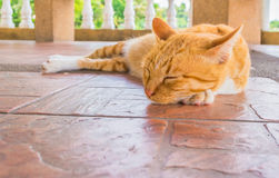 Pretty cat sleep in outside the house image Stock Photography