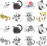 The pretty cats Stock Image