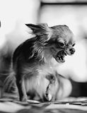 Pretty cheerful mongrel dog Royalty Free Stock Images