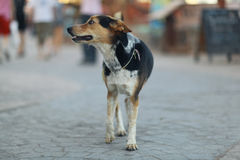 Pretty cheerful mongrel dog Royalty Free Stock Photography