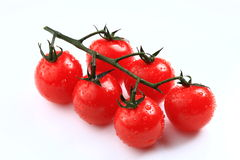 Pretty cherry tomato branch covered with water-drop Stock Images