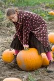 Pretty child picking a pumpkin. A pretty child dressed in a long polkadot coat and long skirt carefully chooses a pumpkin for halloween carving in a field in Stock Photos