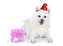 Pretty christmas dog with gift box Royalty Free Stock Image