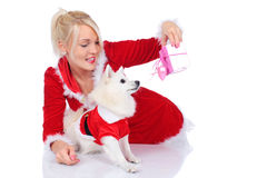 Pretty christmas woman with white dog and gift box Stock Photo