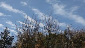 Pretty cloudy sky over serene fall scenery stock video footage