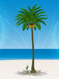 Pretty coconut tree Stock Photography